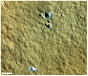 Ground ice exposed in the floor of craters on Mars
