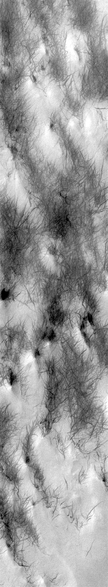 Dust devil tracks (THEMIS_IOTD_20190618)